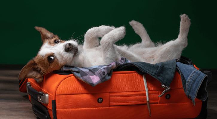 Pet Travel Certificates